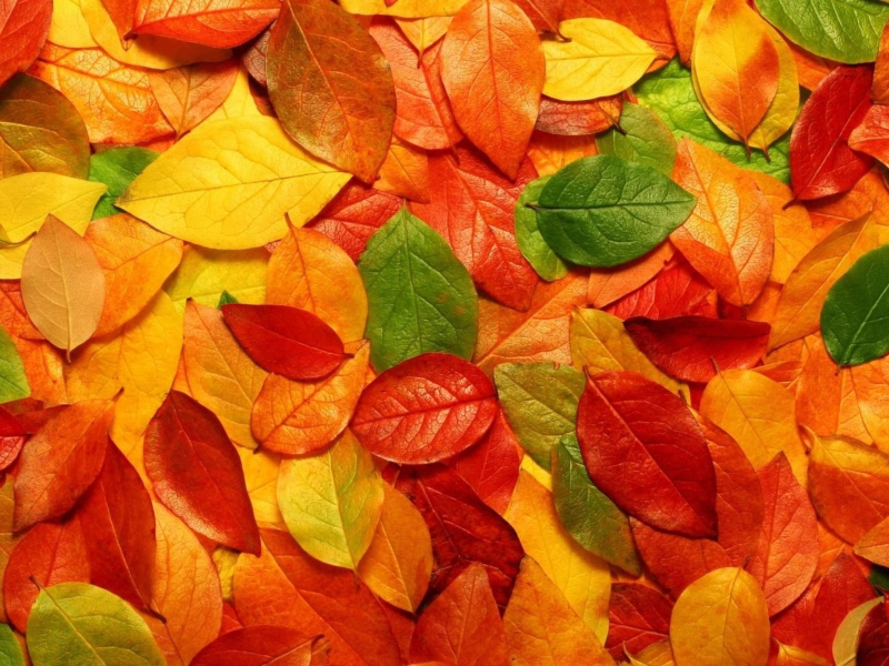 Autumn Leaves Rug 800x600
